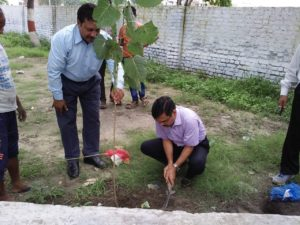 1000 Trees Planted in the Premises of Paswara Papers Ltd